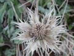 Frost dec 2012 010