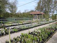 Stillingfleet Nurseries Thumb Buy Advance Family Tickets for Wildlife Day