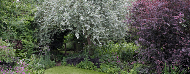 Garden trees and shrubs