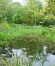 Pond workshop Wildlife Day 2015 Timetable of Events