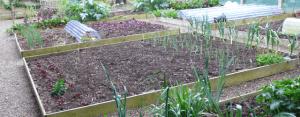 Organic Vegetable Gardening Course