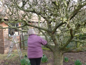 Apple Tree Pruning workshop