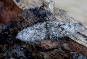 Moth Recording