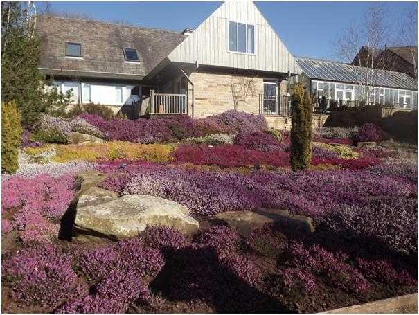 Heather Beds at Harlow Carr