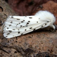 Moth Trapping Nets Two New Species