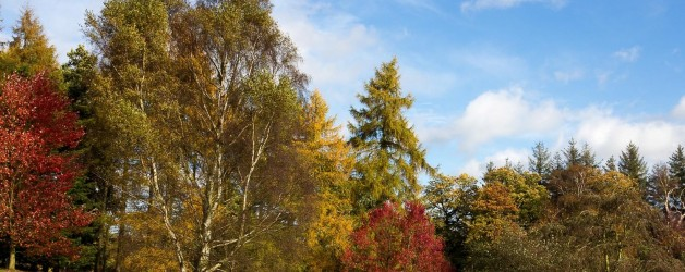 Open Evening with Yorkshire Arboretum Open Gardens Pass