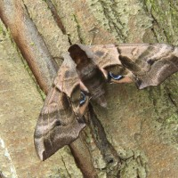 Moths at the Wildlife Day 2016