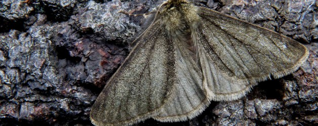 Moths in Early Spring