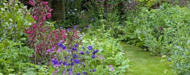 Phlox, Salvias and Dahlias Fill the Borders in August